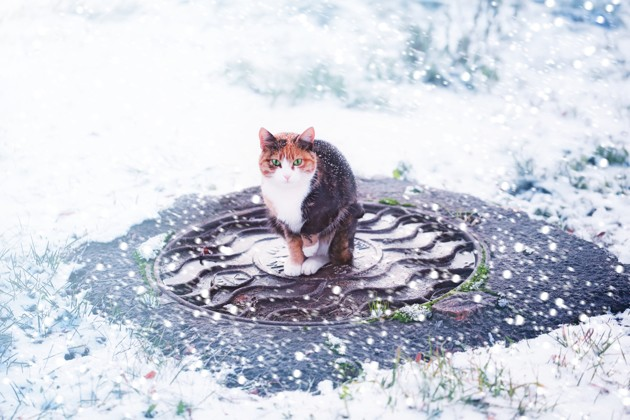 chat en hiver, froid