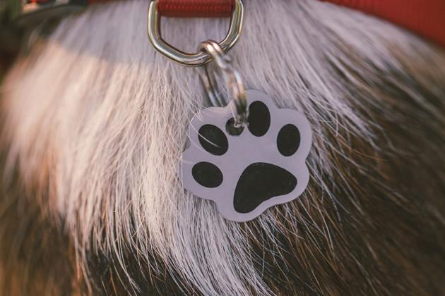 Comment apprendre son nom à un chien ?