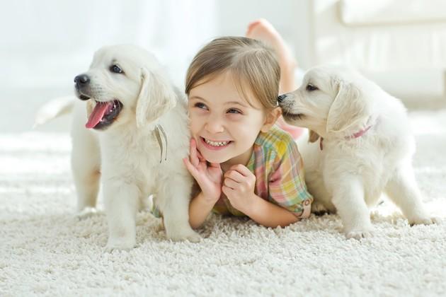 15 races de chiens gentils avec les enfants !