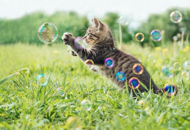 chaton jouant avec des bulles
