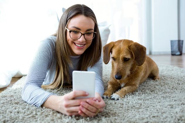 Téléconsultations de vétérinaires : contactez un professionnel de santé animale depuis chez vous !