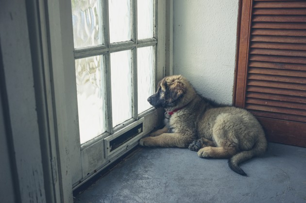 chiot couché devant une porte