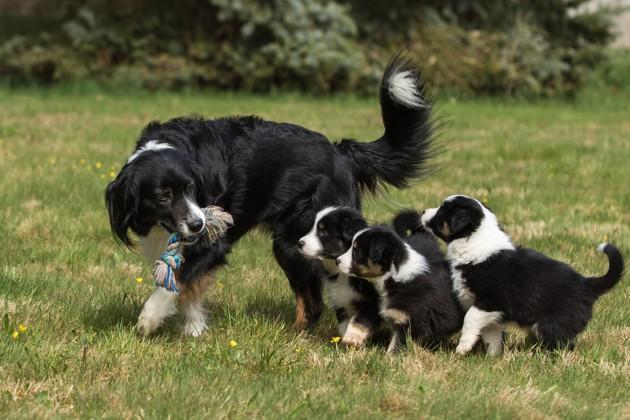 Lucy's Law : en Angleterre, les animaleries ne peuvent plus vendre de chiots et chatons