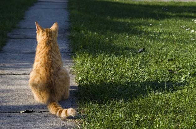 Mon chat a une boule sur le dos : pourquoi et que faire ?