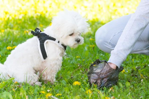ramassage de crotte de chien