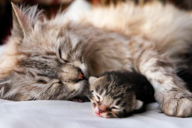 Adopter un chaton ou un chat adulte : que vaut-il mieux choisir ?