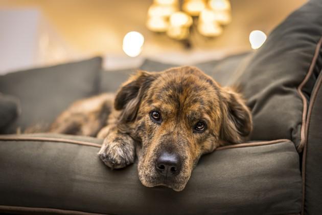 Comment aider son chien à faire le deuil de l'un de ses maîtres ?
