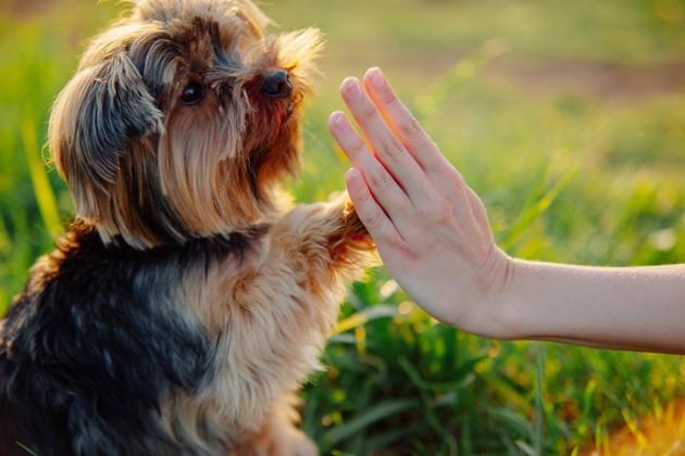 Pourquoi éduquer son chien avec le renforcement positif ?