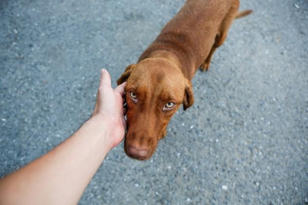 Coronavirus : comment la maladie impacte indirectement les animaux de compagnie