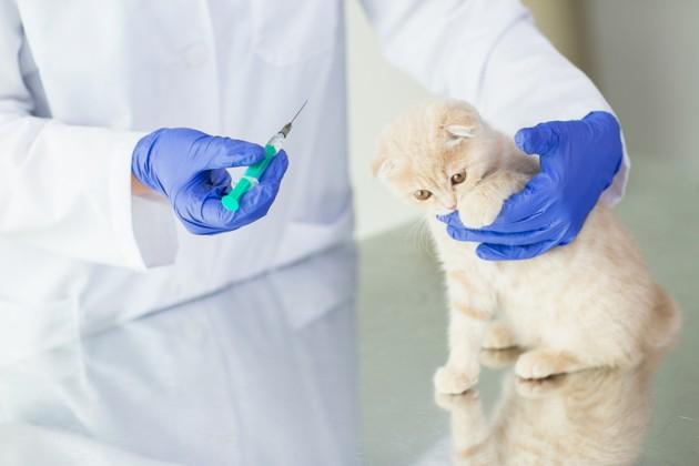 Vaccination raisonnée du chat : quels sont les vaccins indispensables pour qu'il soit en bonne santé ?