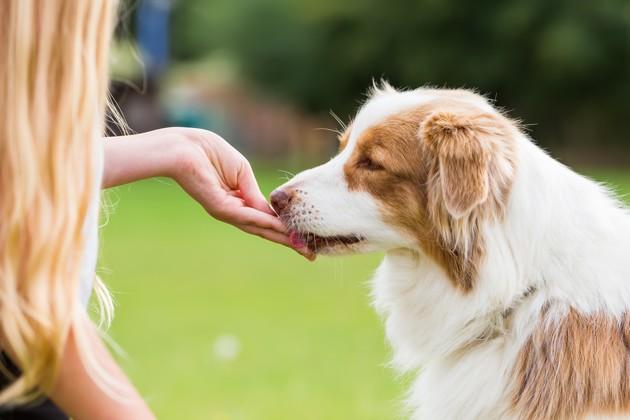 Comment dire « Je t'aime » à son chien ?