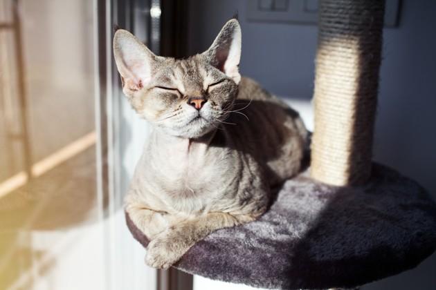 Mon chat / chien aime bronzer au soleil : bonne ou mauvaise idée ?