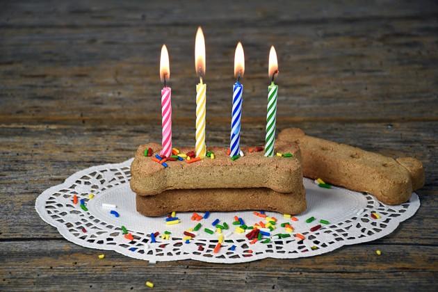 5 idées pour organiser le meilleur des anniversaires pour votre chien !
