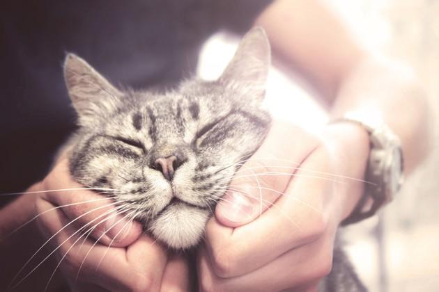 Le guide ultime pour bien caresser votre chat !