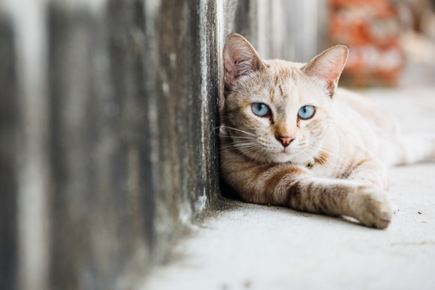 SONDAGE EXCLUSIF - Municipales 2020 : les Français attendent des futurs maires engagés pour les animaux