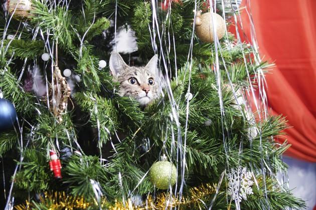 chat caché dans un sapin de Noël