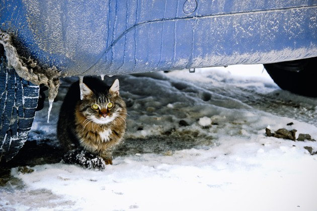 chat qui se met à l'abri du froid en hiver
