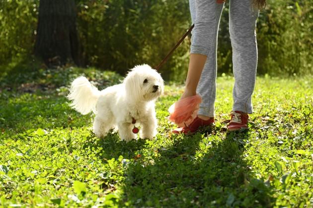 ramasser des crottes de chien