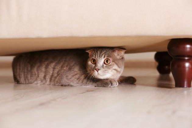 Chaton caché sous un meuble