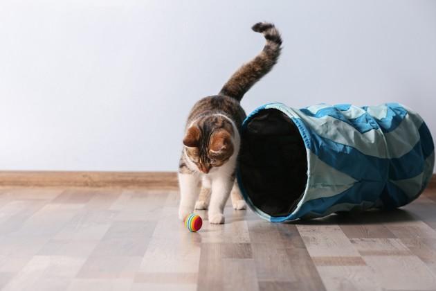 4 règles à suivre pour avoir un chat en bonne santé