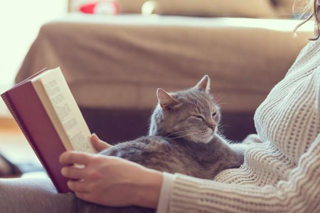 Le ronronnement du chat : que signifie-t-il vraiment ?
