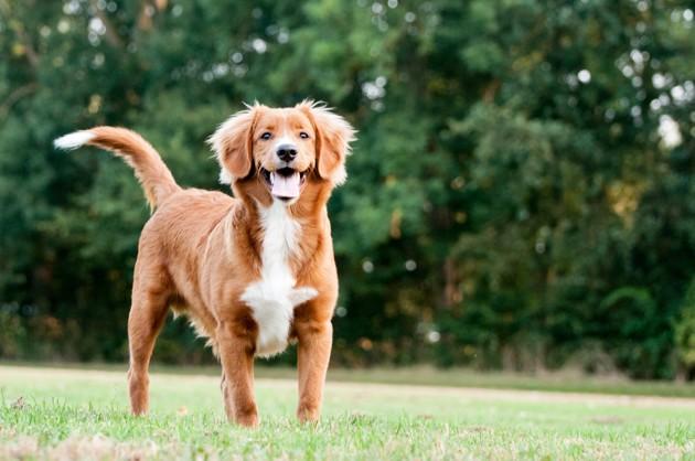 Comment initier son chien au parc canin ?