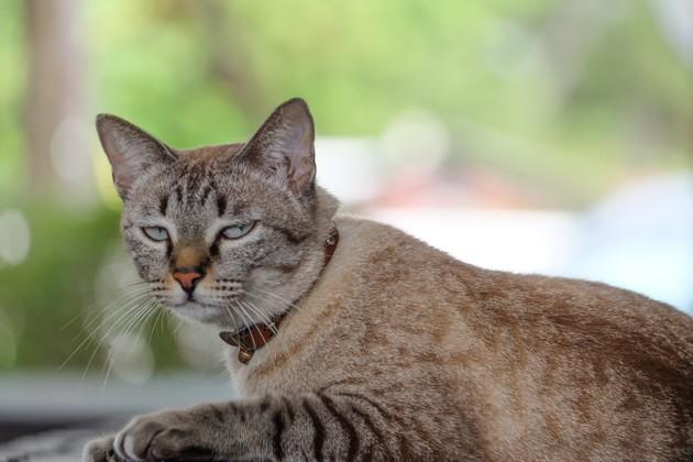 6 choses que vous faites tous les jours et qui agacent votre chat au plus haut point !