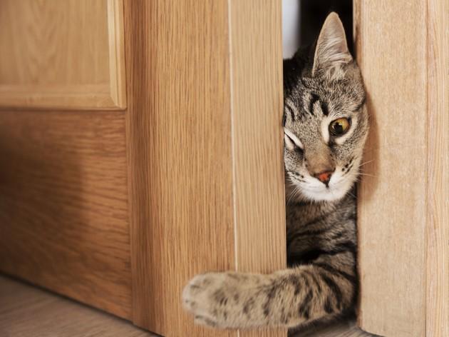 Pourquoi les chats détestent les portes fermées ?