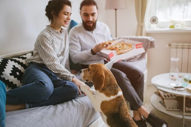 Les chiens peuvent-ils manger de la pizza ?