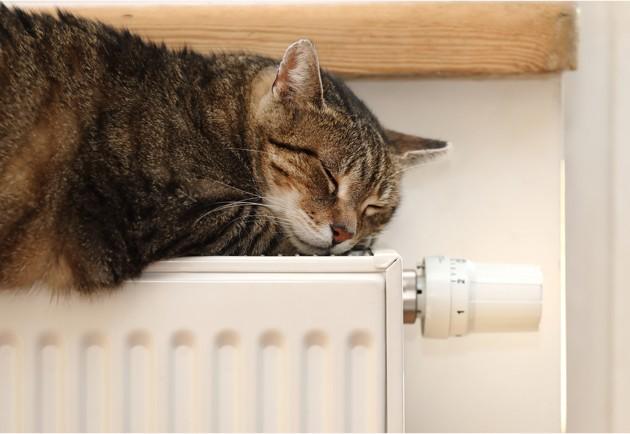 chat qui fait la sieste sur un radiateur en hiver
