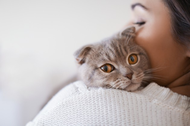 Que faire en cas d'allergie au chat… quand on a déjà un chat ?