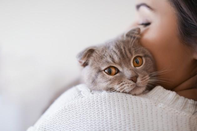 Quel traitement naturel en cas d'allergie au chat ?