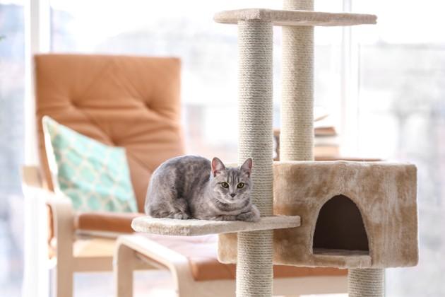 Pourquoi mon chat monte-t-il sur la table, et comment l'en empêcher ?