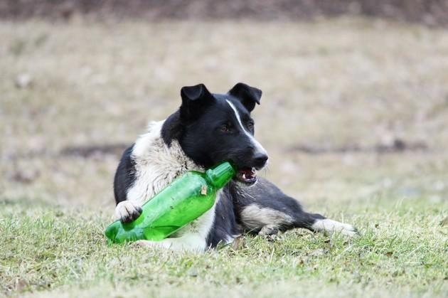 13 aliments toxiques pour les chiens