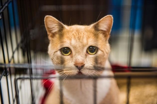 Le 27 juin, c'est la Journée mondiale contre l'abandon des animaux de compagnie !