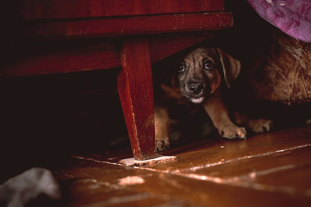 Comment calmer un chien qui a peur de l'orage ?