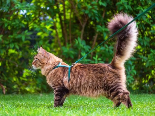 Faut-il mettre un collier à son chat ?
