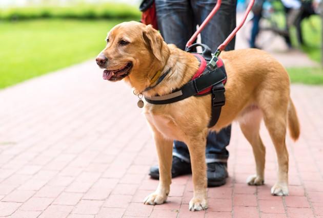 Les pattes des chiens sont moins sales que les chaussures, et ce sont des scientifiques qui le disent !