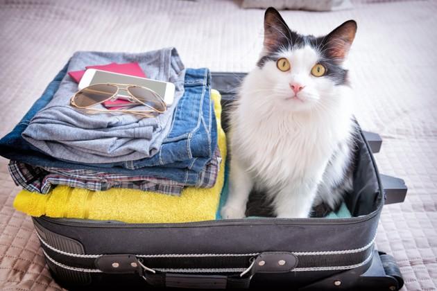 Le passeport pour chien, chat ou furet est obligatoire si on quitte la France avec son animal !