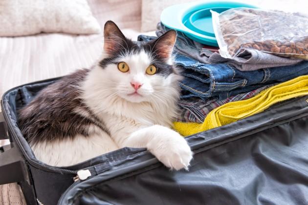 Pour 77% des propriétaires, il est compliqué de partir en vacances avec son animal de compagnie