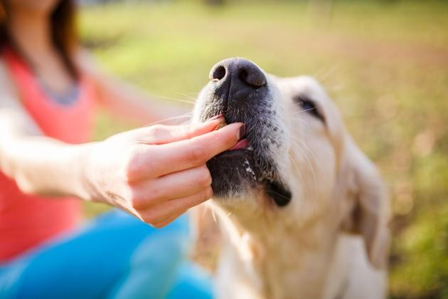 Comment choisir une bonne friandise pour son chien ?