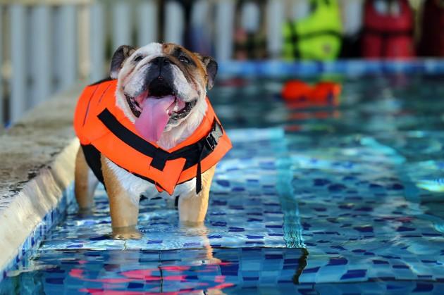 Le chien et la noyade : comment prévenir les risques et agir en cas d'urgence ?