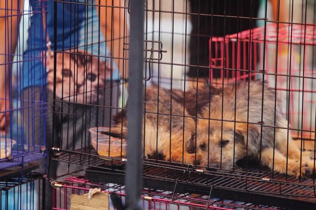 Un chien dans une cage dans la rue en Chine