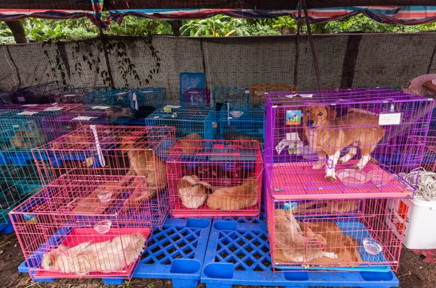 Festival de Yulin
