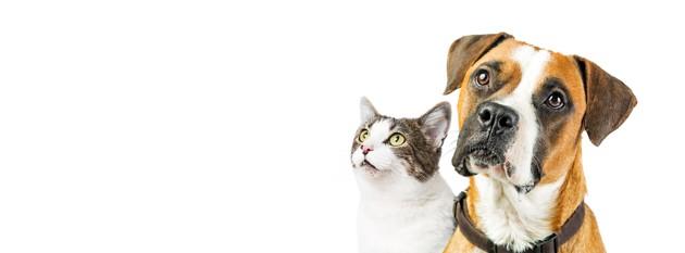 Unleashed 2021 : 2e édition du programme de Purina récompensant les innovations dans le domaine du bien-être animal