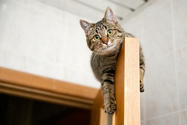 7 solutions pour rassurer un chat stressé (ou peureux)