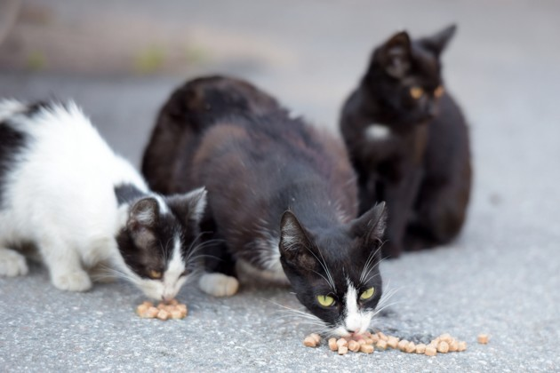 Coronavirus Covid-19 : comment font les associations pour nourrir les chats errants pendant le confinement ?