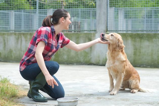 Covid-19 : signez la pétition en faveur d'une aide financière aux associations de protection animale