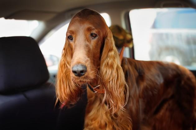 Vacances d'été : que faut-il mettre dans la trousse à pharmacie de son chien ?