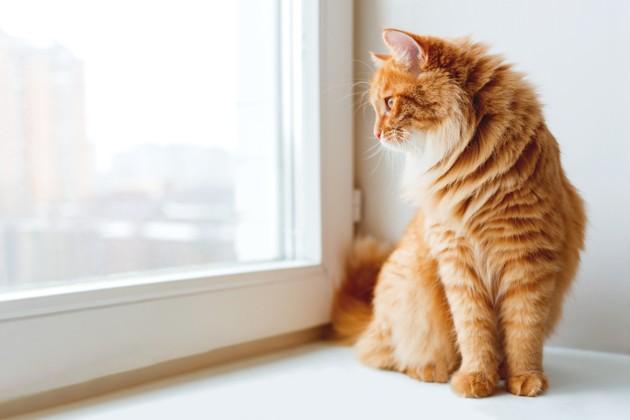 COVID 19 : le comité scientifique vétérinaire recommande le confinement des chiens et chats